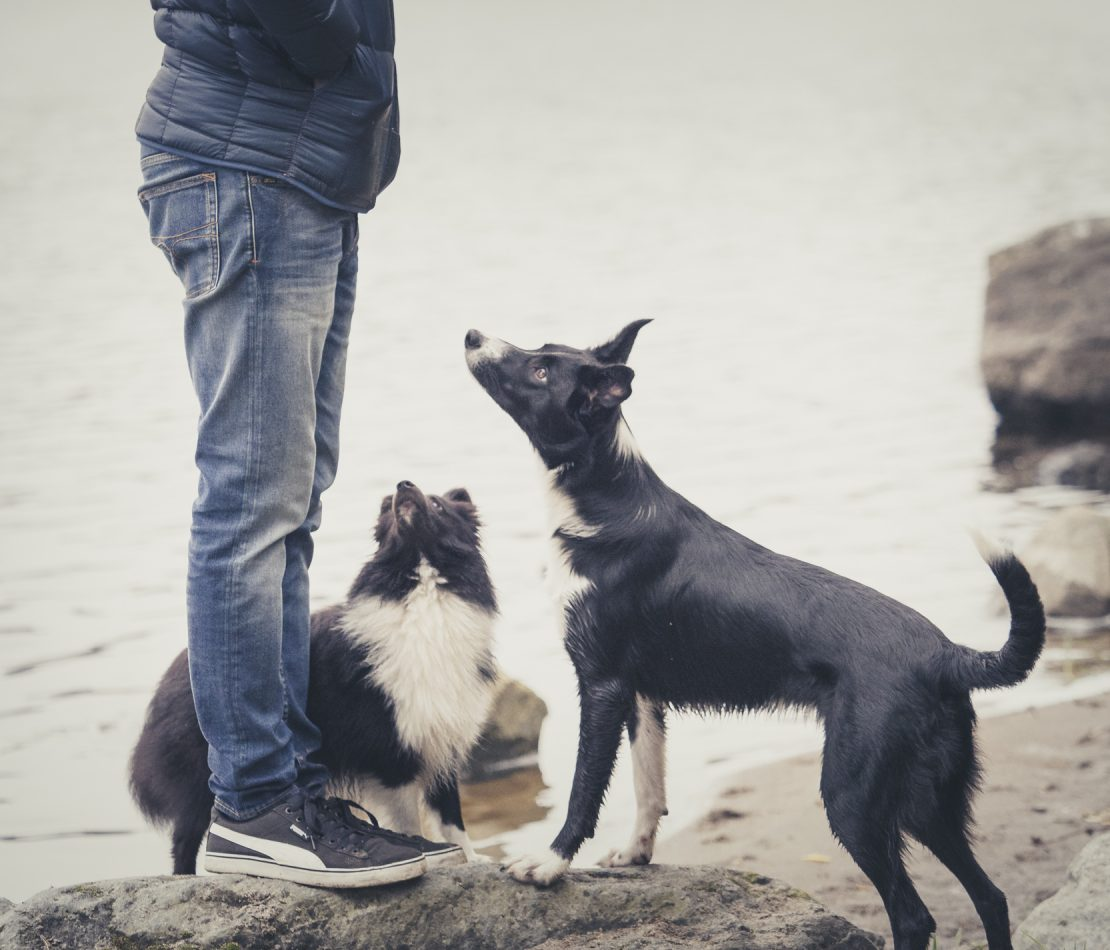 Ole palkka koirallesi