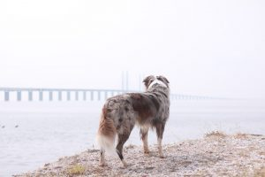 Kiri with Oresund bridge on the back