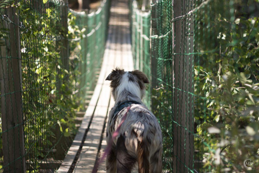 Kiri on suspension bridge