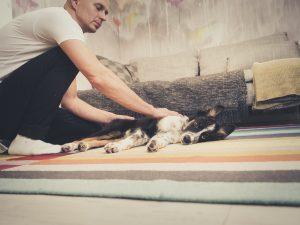 Rauhoittuminen on tärkein taito koiranpennulle