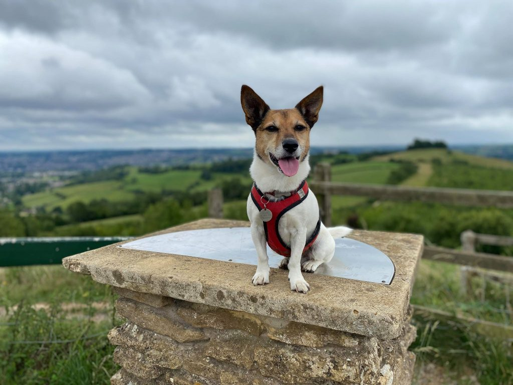 JRT and scenery